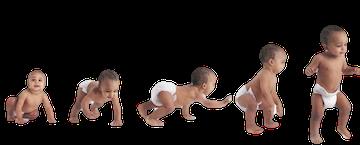 Baby Progression